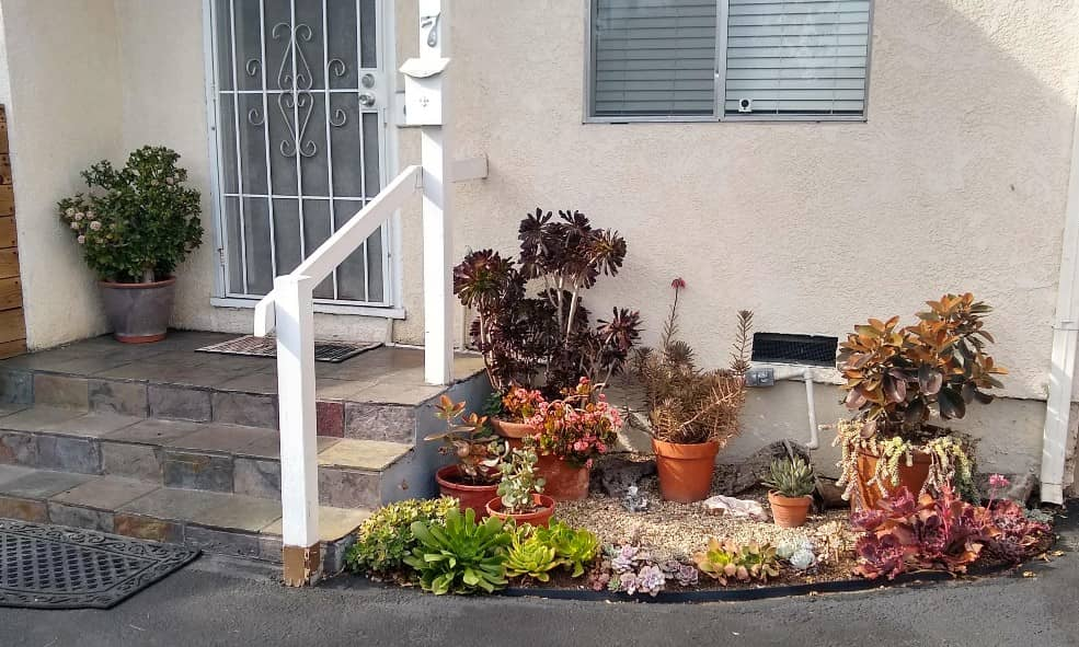 A succulent container garden in front yard can increase the curb appeal of your home.