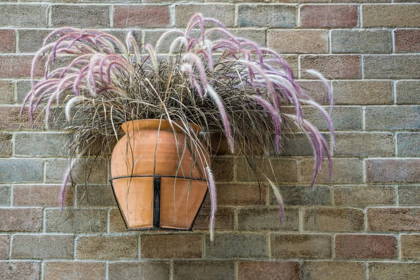 Fountain grass is a low-maintenance plant.